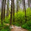 23  G Moulton Forest