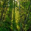 7  G Trail Sun V