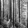 69  G Moulton Falls Trees BW V