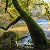 48  G Moulton Falls Tree
