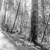 63  G Moulton Falls Trees BW