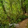 2  G Trail Around Lake