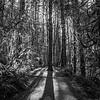 51  G Moulton Falls Tree BW V