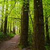 24  G Moulton Forest