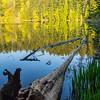 3  G Log and Lake V