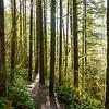 68  G Moulton Falls Trees V