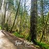 62  G Moulton Falls Trees