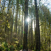 59  G Moulton Falls Trees V