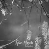 27  G Moulton Falls Mist BW