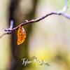 48  G Leaf