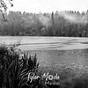 17  G BG Lake Rain BW