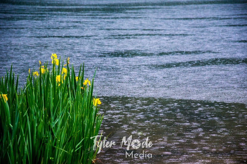 10  G BG Lake and Flowers