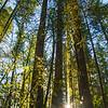 1  G BG Lake Trees V