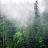 19  G BG Lake Tree Mist V