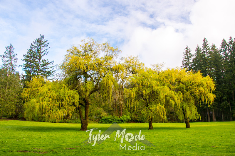 10  G Lewisville Willows