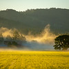 12  G The Old Tree Morning Mist