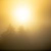20  G Morning Mist Sun
