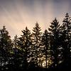 25  G Morning Mist Rays