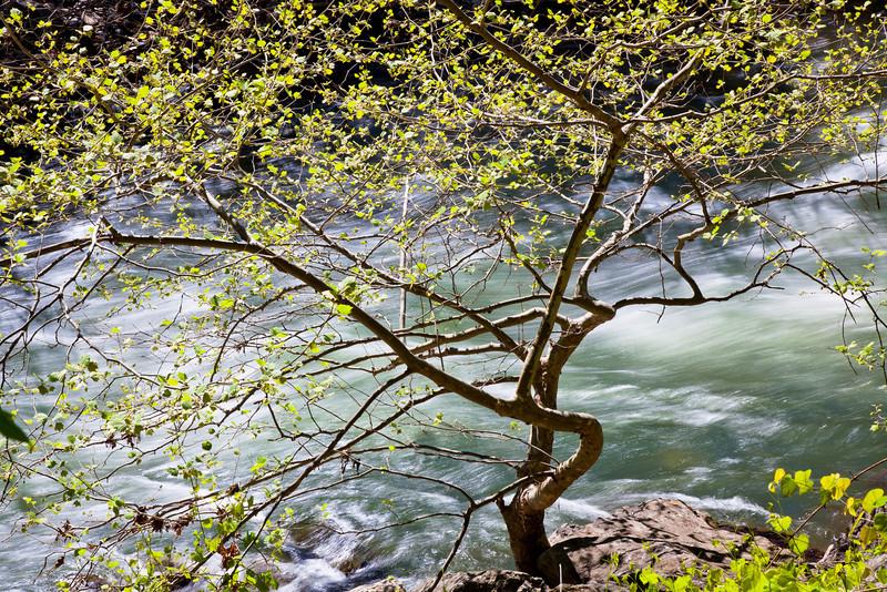 South Branch of Potomic River, WV<br /> (IMG_2940)