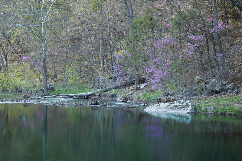 South Branch of the Potomac River, WV in spring<br /> (IMG_5477)