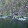 South Branch of the Potomac River, WV in spring<br /> (IMG_5477)