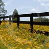 FLOWER FIELD 5-09 066