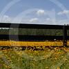 FLOWER FIELD 5-09 051