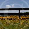 FLOWER FIELD 5-09 054