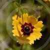 FLOWER FIELD 5-09 046