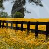 FLOWER FIELD 5-09 049