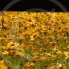 FLOWER FIELD 5-09 059