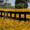 FLOWER FIELD 5-09 050