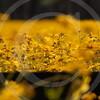 FLOWER FIELD 5-09 053