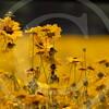 FLOWER FIELD 5-09 060