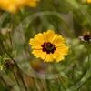 FLOWER FIELD 5-09 062