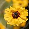 FLOWER FIELD 5-09 045