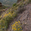 Very steep here at Pinnacles National Monument - May is wildflower season and there are literally hundreds of them in this park.  It had just rained a bit when I took this and the colors came up great.  The flowers are golden yarrow.