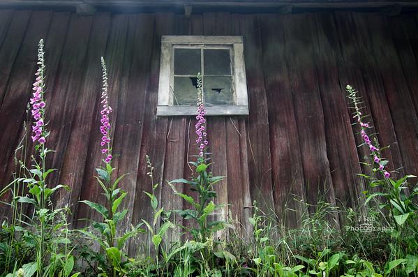 barn window-3415
