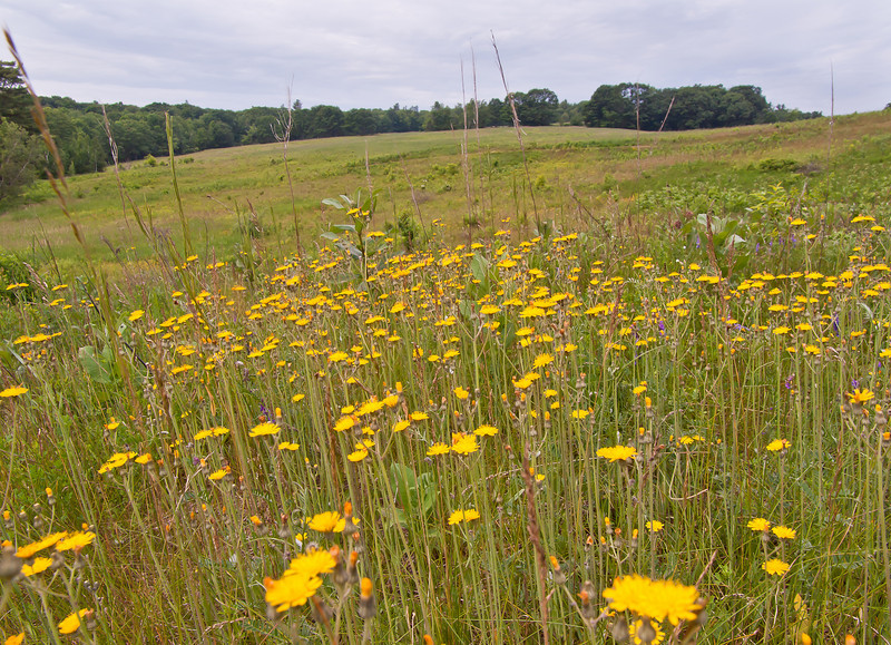 An actual meadow.  Not lawn.  Not a golf course.  Not a housing development.  Not a mall.  Not a parking lot.  A meadow.  Wow.  See it while it lasts at Northwood Meadows State Park.  It's private land, but the owners allow hiking.  Yay!