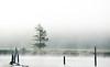 siuslaw fog-9378