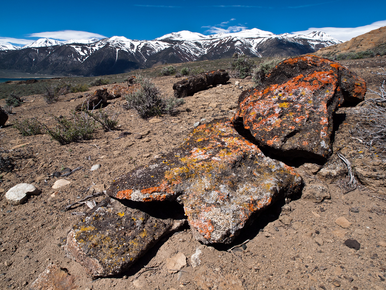 Cooled lava rock on the slopes of Black Point on Mono Lake.  Lichens make that vivid orange and yellow and I loved the color against the cool tones of the mountains and sky.