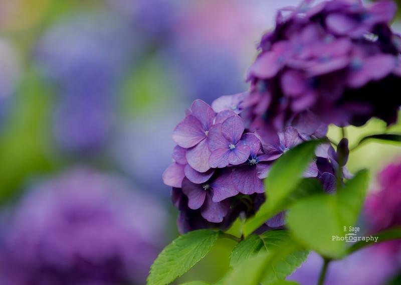 chris's flowers-2726
