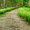 My kind of path