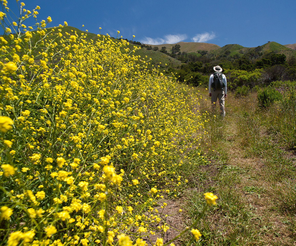 the Mystery Hiker returns, this time on the East Molera trail at the Andrew Molera State Park.