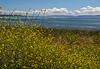 the view to Puget Sound from Discovery Park in Seattle, WA.