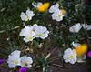 desert flowers-8688