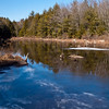 Beaver pond at Pulpit Rock Conservation area.  Alas, I did not see one while I was there.