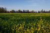 yamhill springtime barn-9626