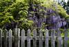 picket fence-0161