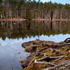 Spatterdock Pond @ Beaver Brook conservation area.